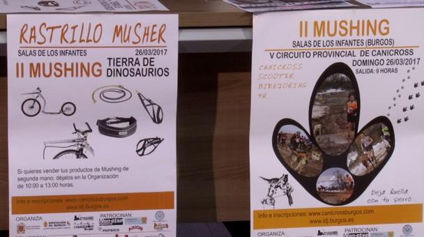 Este domingo el V Circuito Provincial de Canicross acoge el II Mushing Salas de los Infantes
