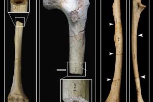 Nuevas pruebas consolidan la teoría del origen funerario de la Sima de los Huesos