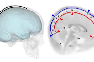 Nuevo estudio sobre las relaciones espaciales entre cerebro y cráneo en los humanos modernos