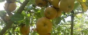 La Asociación Las Caderechas continúa con las sesiones del V curso de Fruticultura