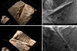 Las tortugas eran un alimento complementario en la dieta humana hace 400.000 años