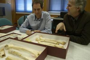 Recuperado ADN nuclear de hace 430.000 años en fósiles humanos de la Sima de los Huesos de los Yacimientos de Atapuerca