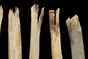 Los carnívoros salvajes son una pieza clave para interpretar el pasado