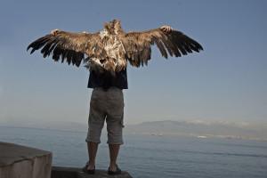 La revista Quaternary International publica un volumen dedicado a la interacción entre aves y humanos en la Prehistoria
