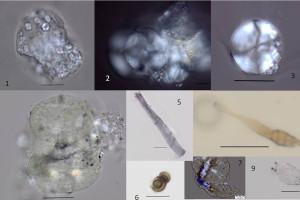 Un estudio revela la dieta vegetal del primer europeo hallado en el yacimiento de la Sima del Elefante de Atapuerca