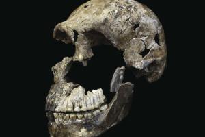 El CENIEH participa en el primer trabajo internacional de dataciones de la nueva especie 'Homo naledi'
