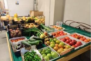 Mañana se comercializan los cultivos y productos del huerto ecológico de la Universidad de Burgos