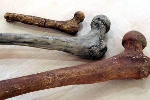 Estatura y peso evolucionan a diferentes ritmos en el género Homo