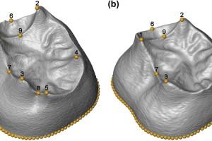 Primer estudio morfométrico en 3D de los molares de la Sima de los Huesos