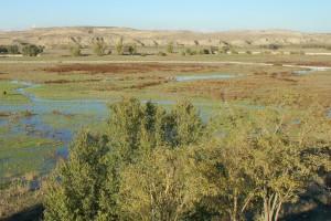 Un estudio del polen reconstruye el paisaje de Madrid desde hace 400.000 años