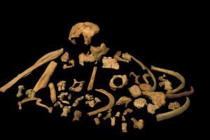 El CENIEH realiza la primera datación directa de un diente fósil de esta especie encontrada en el yacimiento de Gran Dolina de Atapuerca