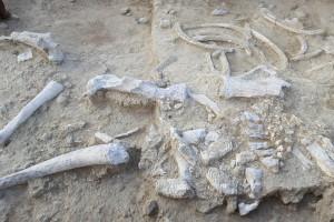 El CENIEH recibe cerca de cien mil euros para seguir investigando en Olduvai