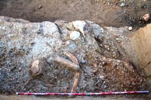 restos-de-elephas-palaeoloxodon-antiquus