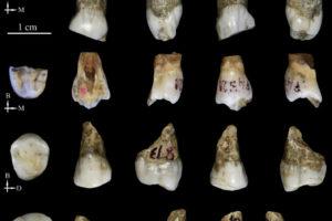 Los homínidos de Tongzi podrían ser un nuevo linaje humano en Asia