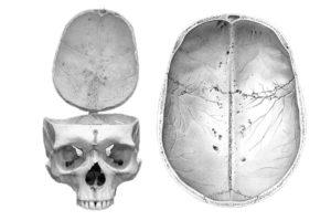 Se estudia el cerebro humano a partir de las huellas craneovasculares