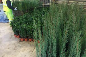 La Diputación Provincial entregará cerca de 10.000 plantas dentro de la campaña anual de distribución de plantas ornamentales