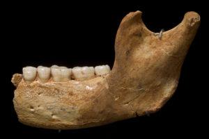 El estudio de material proteínico de un diente de Homo antecessor de Atapuerca se convierte en la evidencia genética humana más antigua