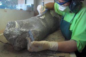 El Museo de Dinosaurios se asoma virtualmente al Día Internacional de los Museos
