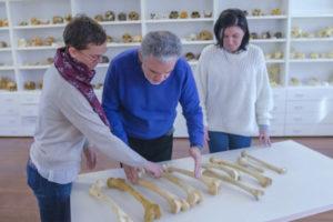Un proyecto del Laboratorio de Evolución Humana de la UBU forma parte de la exposición Campus Vivo. Investigar en la Universidad