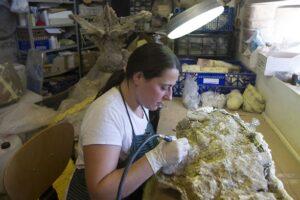 El Museo de Dinosaurios de Salas de los Infantes se suma un año más a la celebración de este evento internacional con un programa dirigido a todos los públicos