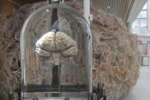 Se publica El Cerebro Humano y su evolución en el Diario de los Yacimientos de la Sierra de Atapuerca