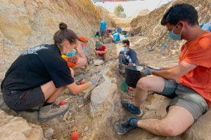 Balance final de la XVIII Campaña de excavaciones de dinosaurios en Burgos, V Campaña en Torrelara
