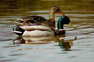 """Canta, vuela y elévate como las aves!"""" eslogan del día Mundial de las Aves Migratorias que se celebra este fin de semana"""