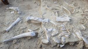 restos-de-elefante-tk